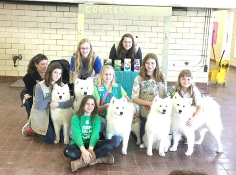 Girl Scounts and SFX Samoyeds